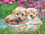 Calendar - 12 Month - A Puppies- 12 Photos (horizontal)