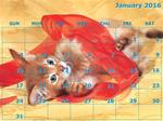 Calendar - 12 Month - A Kittens- 12 Photos (horizontal only)