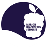 Marion Blackberry - Seedless Jam, 12 oz.