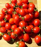 Winter Grape Tomato