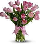 20 Pink Tulips
