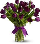 20 Purple Tulips