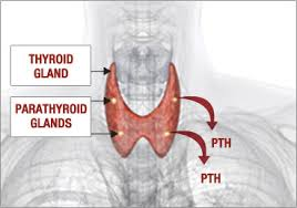 173 B.E.S.T. Treatment of Hyperparathyroidism: Read more...