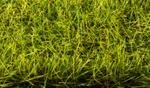 10mm Xlong Spring Meadow Static Grass 1.75oz  approx 2 cups