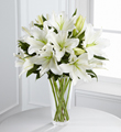 lilies of white