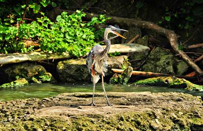 Heron Greeting