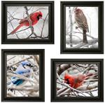 Gray Day Collection--Four 8x10 Winter Bird Prints with Free Shipping!