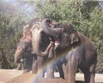 Help Elephants Each month with a $25 donation to the Elephant Preserve