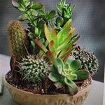 Mix of Succulent Plants