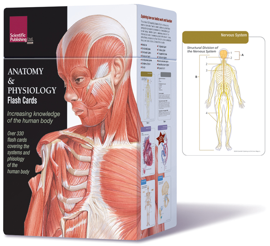 Human Anatomy And Phsiology Gallery - human anatomy organs diagram