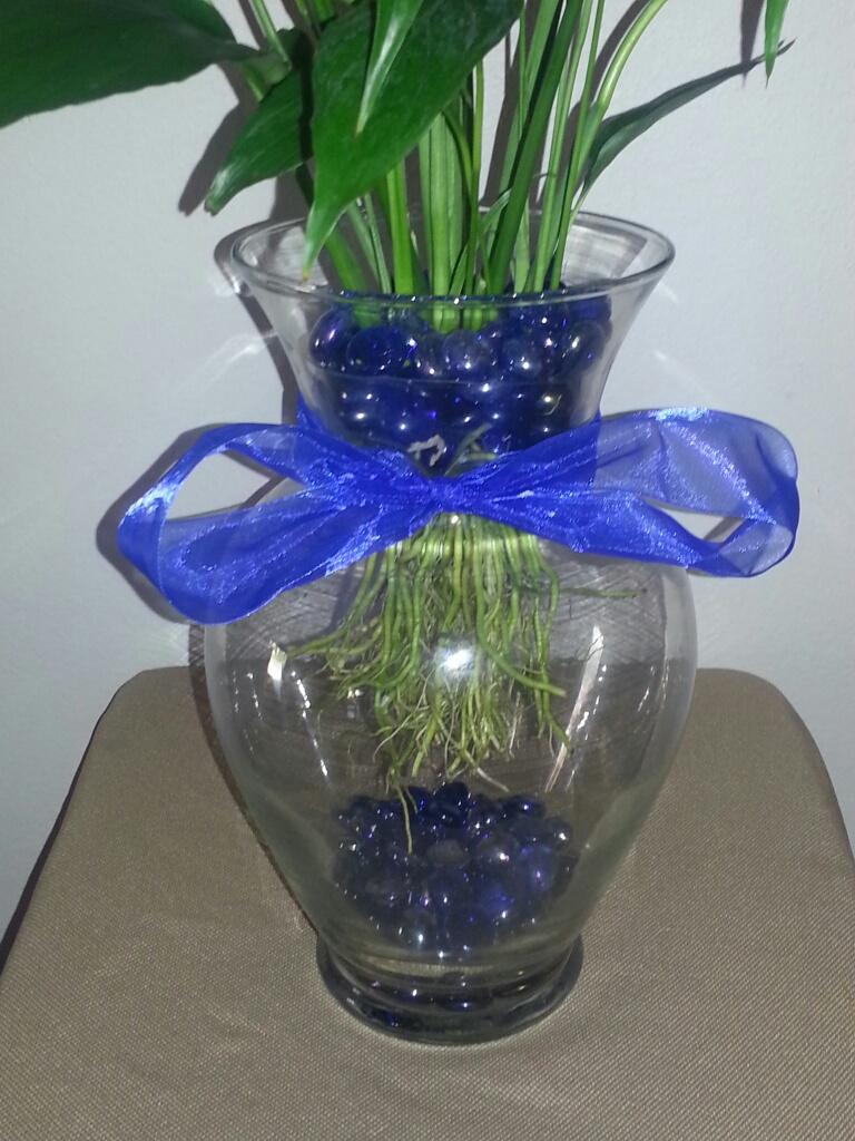 105 inch betta vase aquarium with peace lily plant blue betta 105 inch betta vase aquarium with peace lily plant blue betta creations reviewsmspy