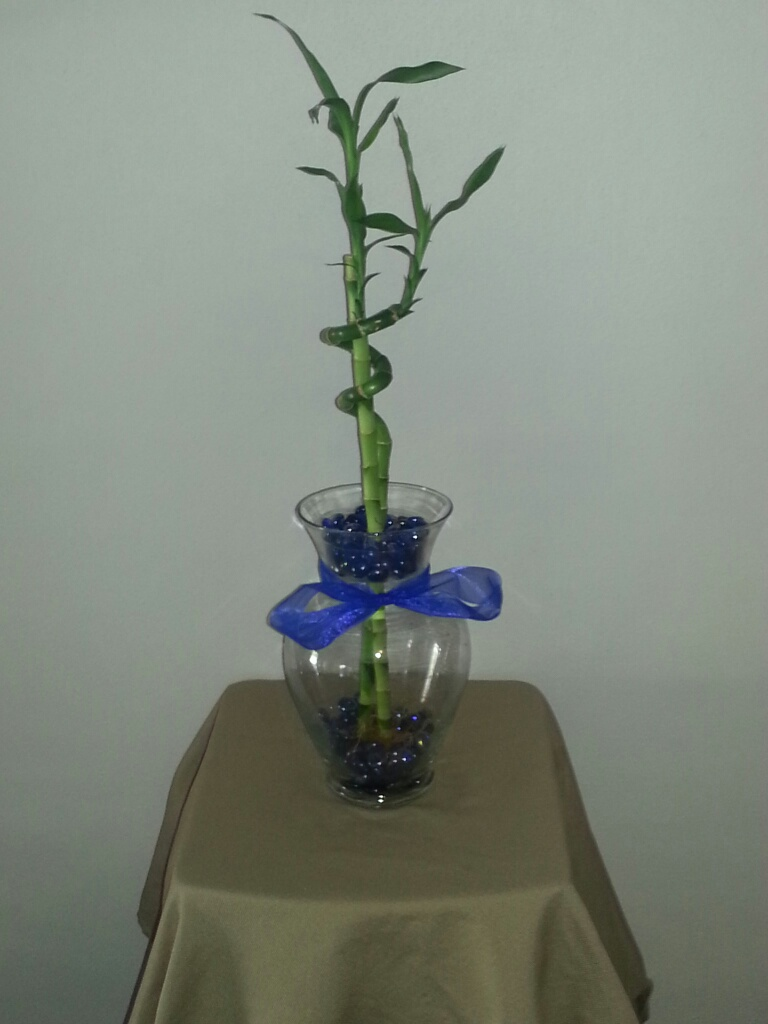 10 5 inch betta vase aquarium with lucky bamboo blue for Plants for betta fish vase