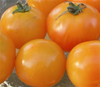 Amber Tomatoes (100% natural, grown without chemicals)