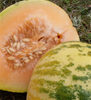 Sweet Freckles Melon (100% natural, grown without chemicals)