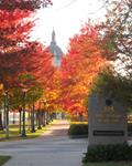 Autumn Cathedral of Saint Paul
