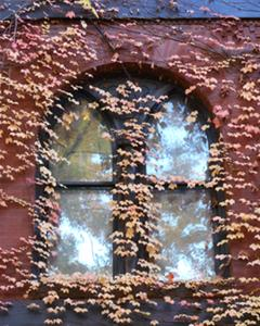 Arched windows reflect yellow leaves and are set in a red brick wall covered with climbing orange leaves