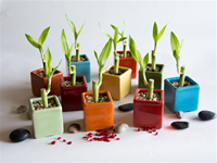 Small Bamboo Favors