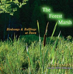 The Forest Marsh