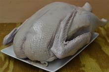 One Fresh Whole Goose