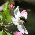 Blossom/Bee Festival - Learn to Paint Blossoms! May 25th 9-2