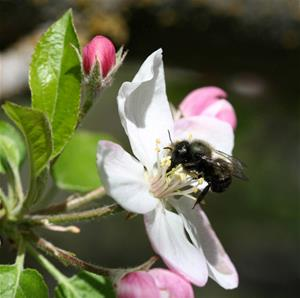 Blossom/Bee Festival - Learn to Paint Blossoms!