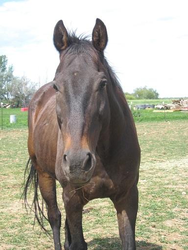 Woody, Colorado Horse Rescue