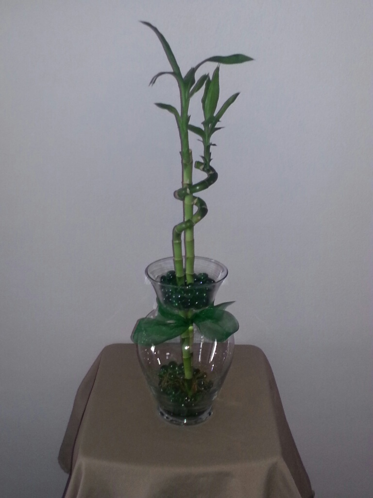10 5 Inch Betta Vase Aquarium With Lucky Bamboo Green