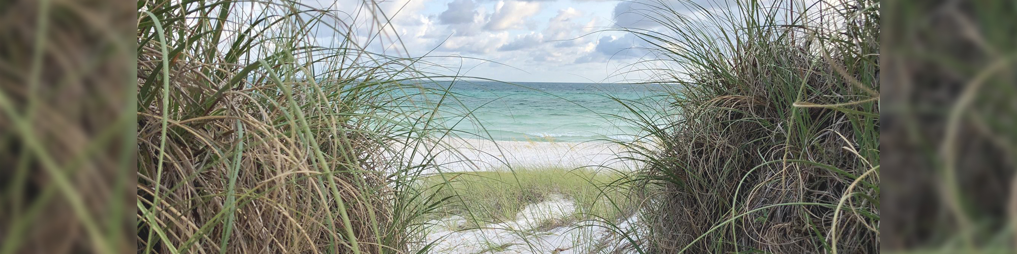 Smaller Beach banner image