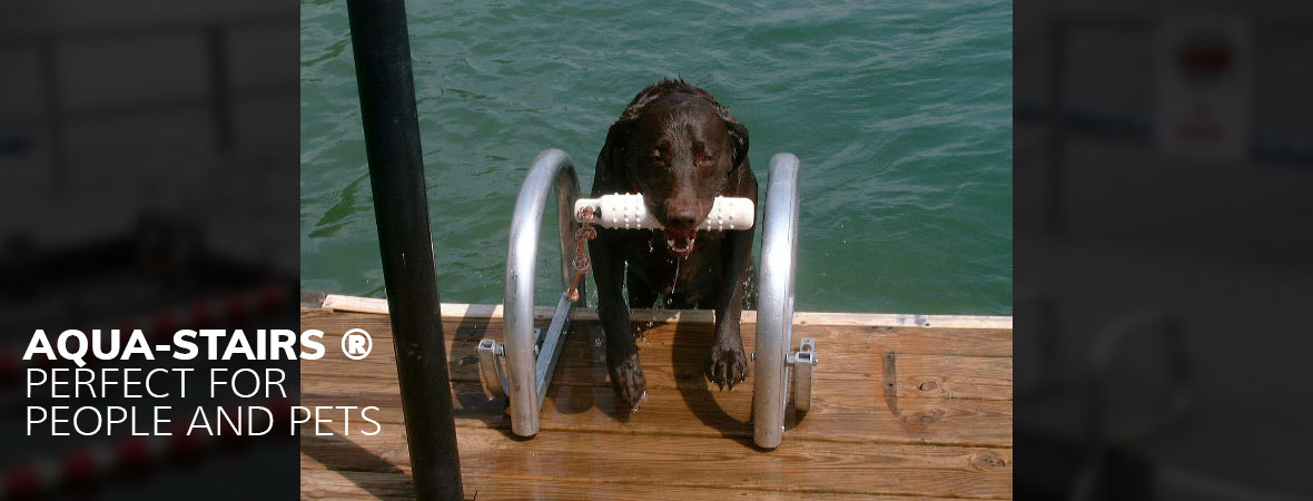 Dog using a dock ladder